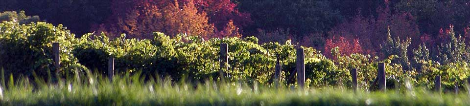 header-winery-2
