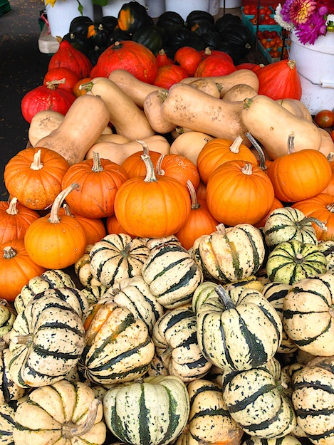 array of squash