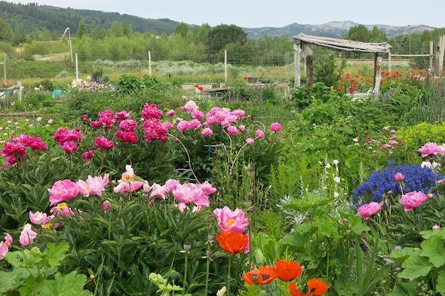 Aspen Community Garden