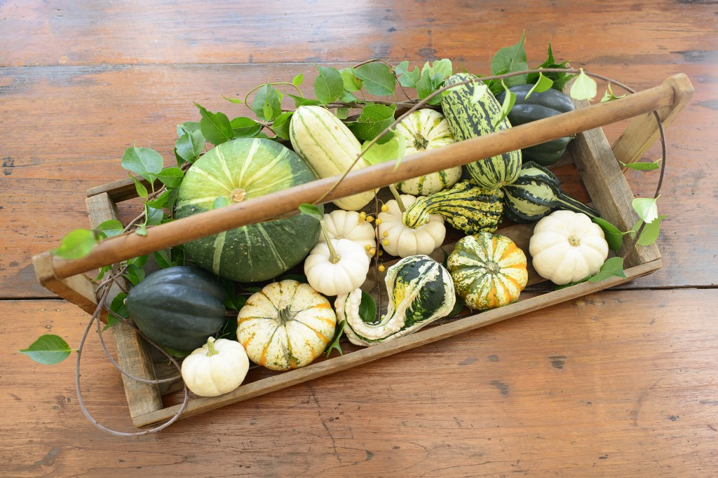 Seasonal Snippet: Winter Squash in Autumn