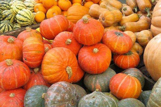 Seasonal Snippet: Profusion of Pumpkins