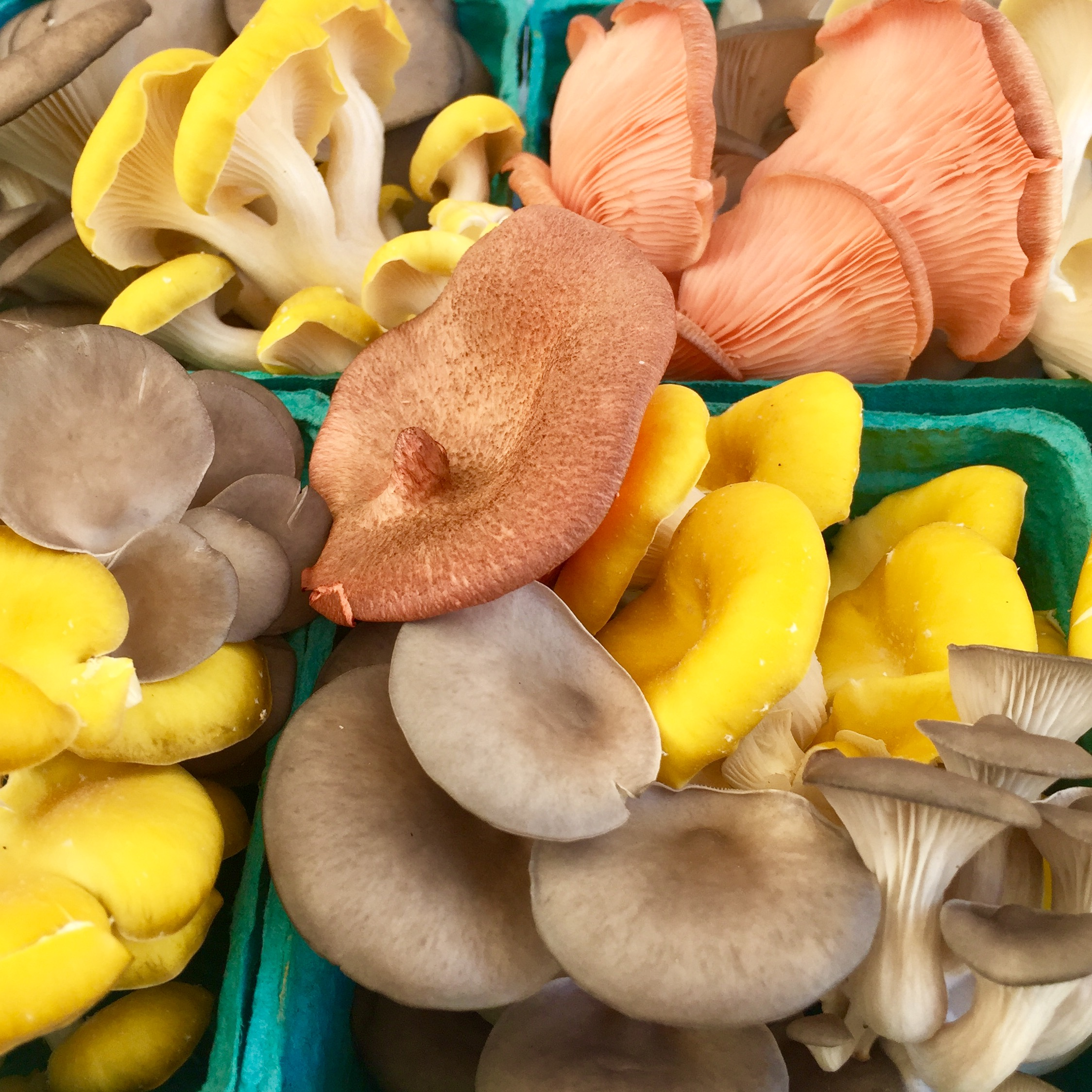 3 Reasons We've Fallen for Foraged Fungi