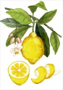 the spice companion a guide to the world of spices brighten winter dishes with citrus - Kosher Like Me
