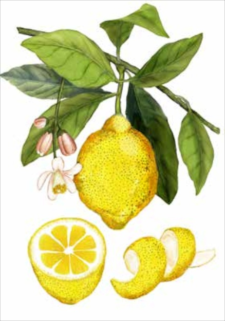 the spice companion a guide to the world of spices brighten winter dishes with citrus