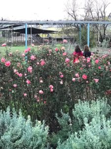israel herb farm kosher like me travel - Kosher Like Me