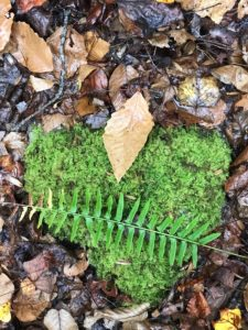 Moss heart in the forest Thanksgiving - Kosher Like Me