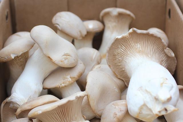 organic CT mushrooms