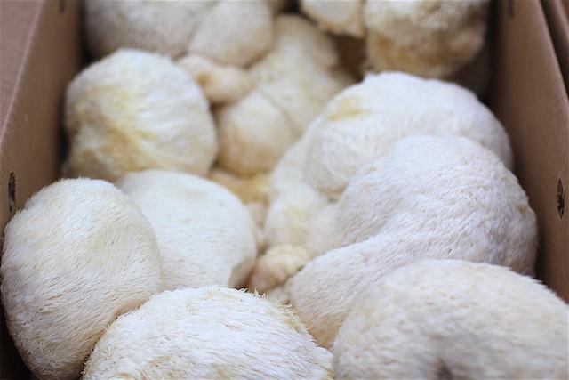 CT organic mushrooms